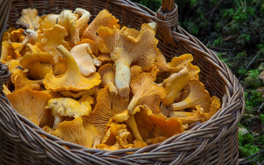 mushrooms and beta-glucans boost immunity