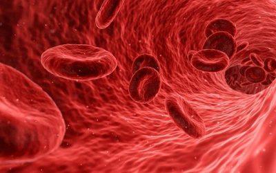 Blood: The Liquid Organ